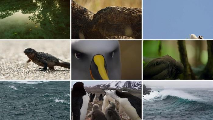عکس های مستند سیاره زمین 2